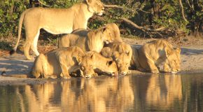 Traveler Story: The Great African River Safari