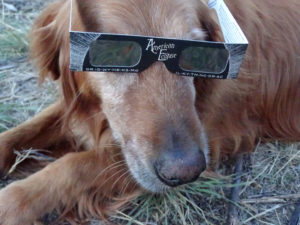 Dogs don't dig totality.