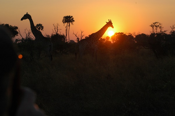 Sunset near Abu Camp, Botswana