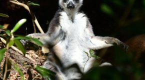 Traveler Story: Madagascar Wildlife Adventure
