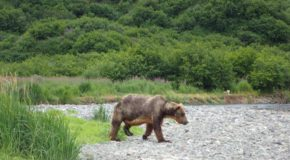 An Amazing Day in Katmai