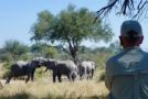 A Secluded Botswana Safari Experience