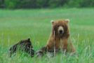Photos from a Great Alaskan Grizzly Encounter