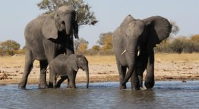 Photos from a Zimbabwe & Zambia Safari