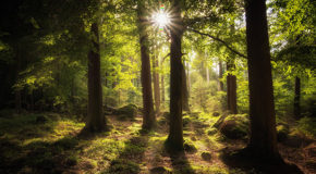 Dear Forests: Wish You Were Here—and That You'd Remain