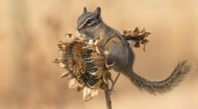 Wildlife Photo of the Week: The Colors of Fall