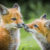 Wildlife Photo of the Week: Baby Foxes