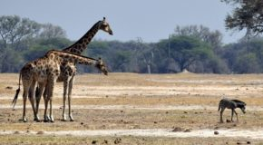 Fascinating Wildlife in Zimbabwe