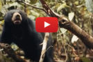 "Videos: The Sun Bear, ""He Who Likes to Sit High"""