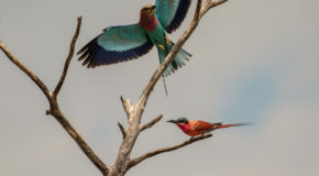 Reflections on the Birds of Botswana