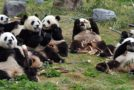 Traveler Story: China Panda Adventure