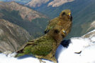 "New Zealand Builds Gyms for ""Problem"" Birds"