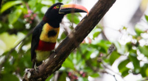 Wildlife Encounters in Costa Rica