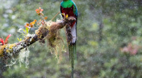 Wildlife Photo of the Week: Quetzal