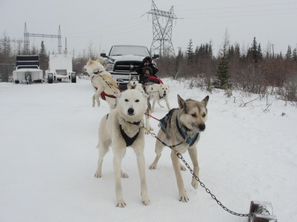 Sled dogs in Churchill