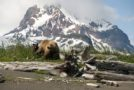 Traveler Story: Great Alaskan Grizzly Adventure