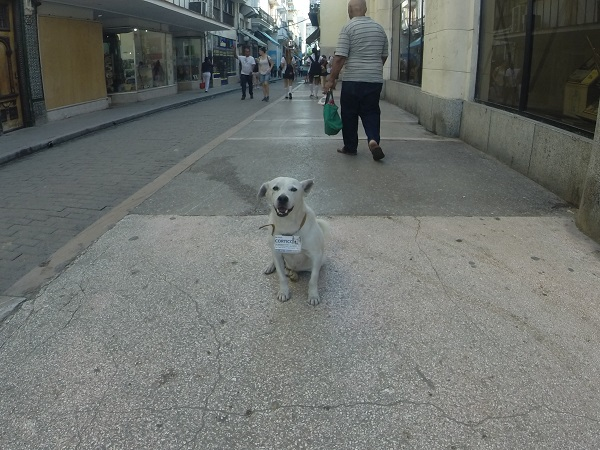 """Shorty,"" the dog that belonged to the city of Havana. The sign on his neck told everyone to treat him well. He went where he wished and when he so desired."
