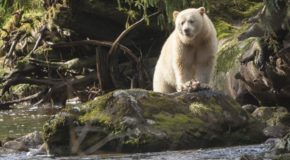 Traveler Story: Emotional Depth on a BC Nature Adventure