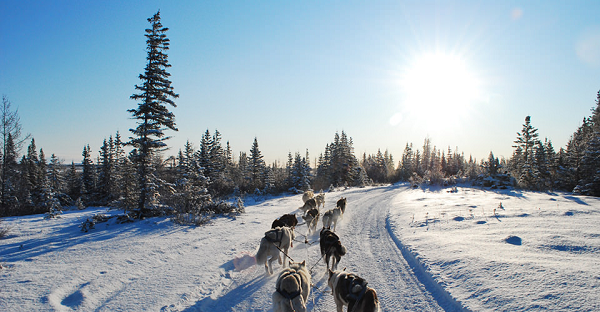 Greenland sled dog ride