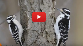 Video: Identifying Birds—and Avoiding Awkward Captions