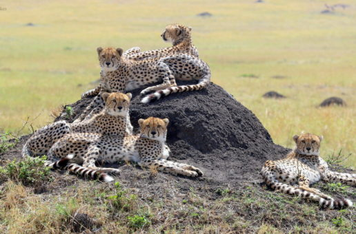 Wildlife Photo of the Week: Family Affair