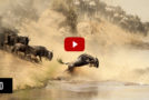 "Nat Hab's ""Great Migration Safaris"" Video in the Adventure in Motion Film Contest!"