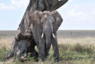 Esteeming Elephants: September 22 Is National Elephant Appreciation Day