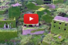 "Video: A Chinese Village Goes ""Green""—When Plants Take Over"