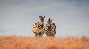 Wildlife Photo of the Week: Two of a Kind