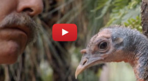 "Video: Literally ""Talking Turkey"" on This Thanksgiving"