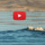 Video: Using Drone Photography to Protect the Arctic