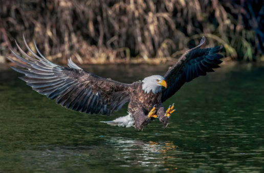 Wildlife Photo of the Week: Perfect Fishing