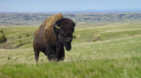 Grasslands: A Lot More Than Just Flyover Country